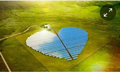 solar plant shaped heart